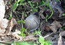 Հադրութում գնդիկաբեկորային ավիառումբի պայթյունից քաղաքացի է վիրավորվել