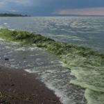 Սևանա լիճը թունավոր ջրիմուռներով աղետի մեջ (տեսանյութ)